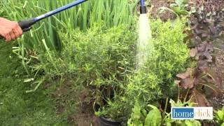 Reviving Your Herb Garden